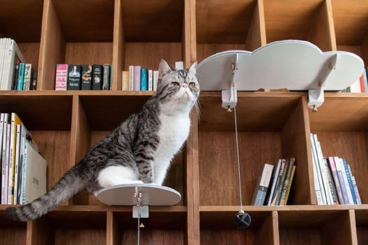 家具を活用し、ネコに垂直方向への移動手段を提供する「CATSSUP」