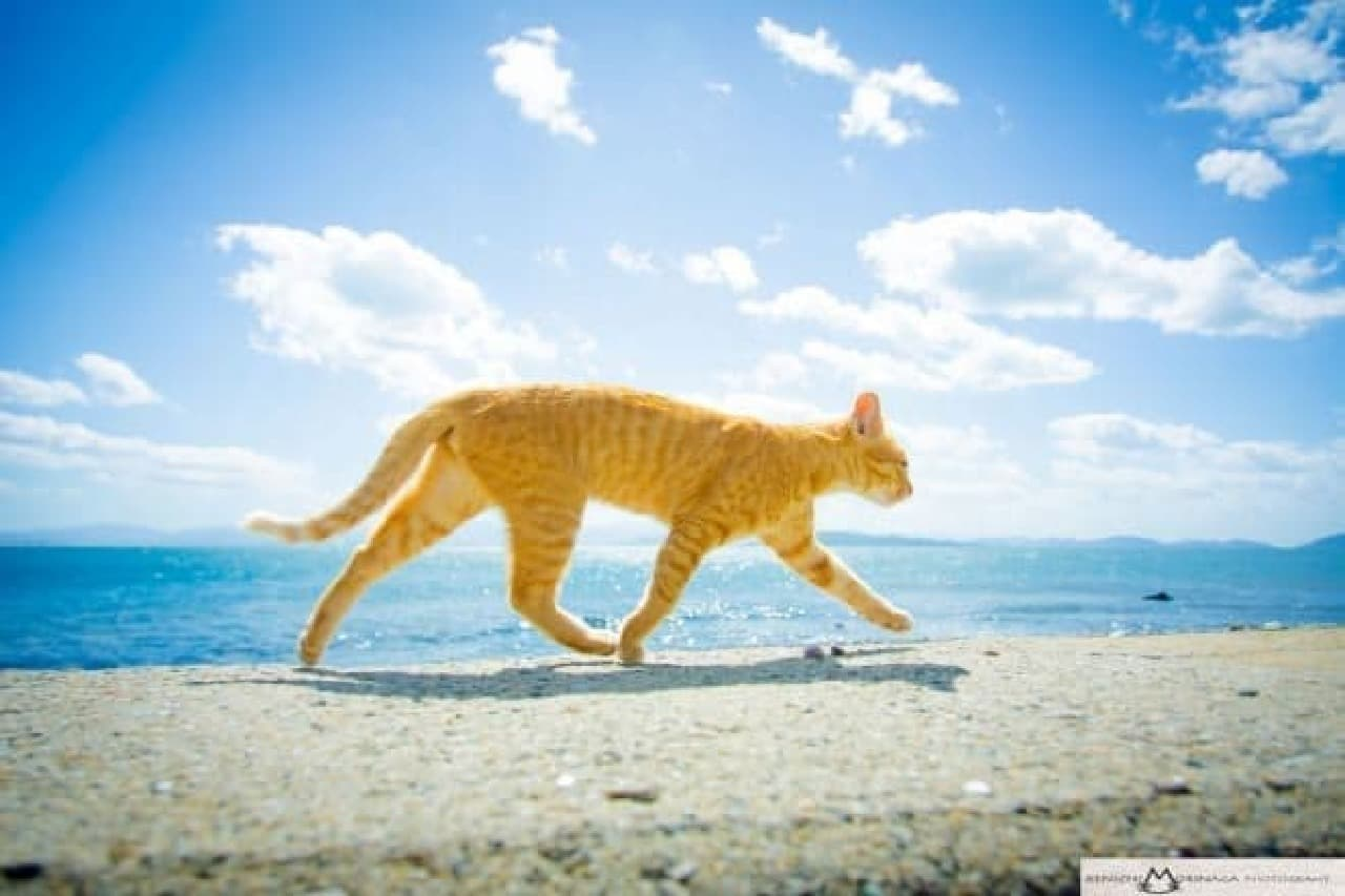 旅するネコ写真家 森永健一さんに聞いた「ネコを撮る5つのコツ」