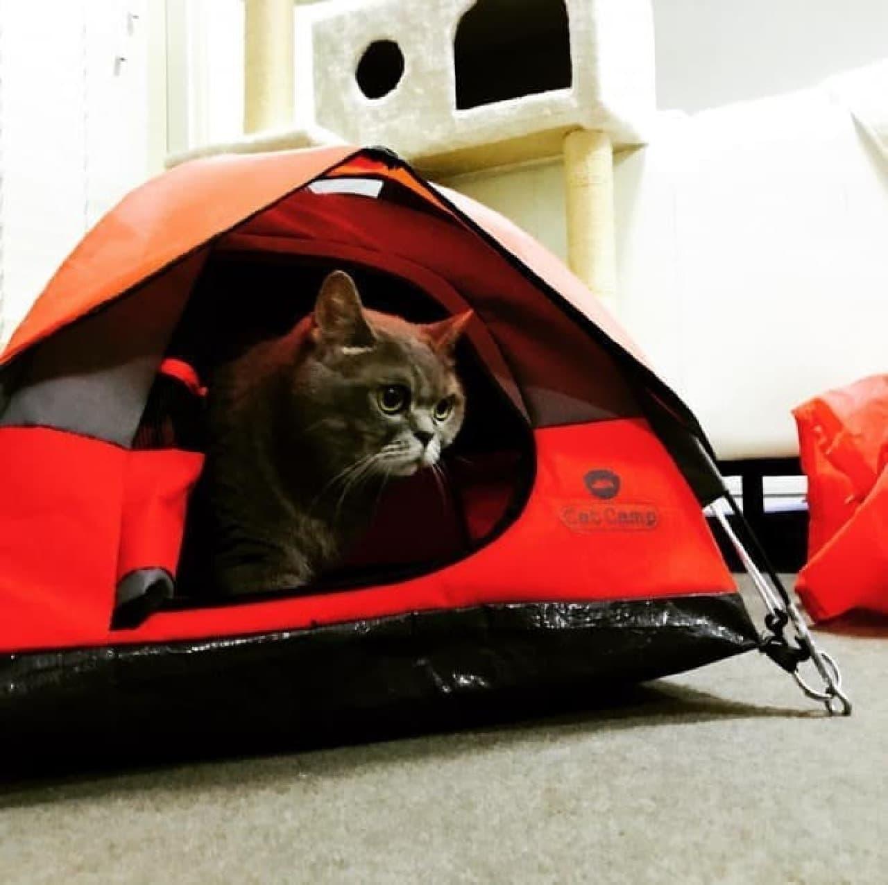 ネコ用テント「Cat Camp」