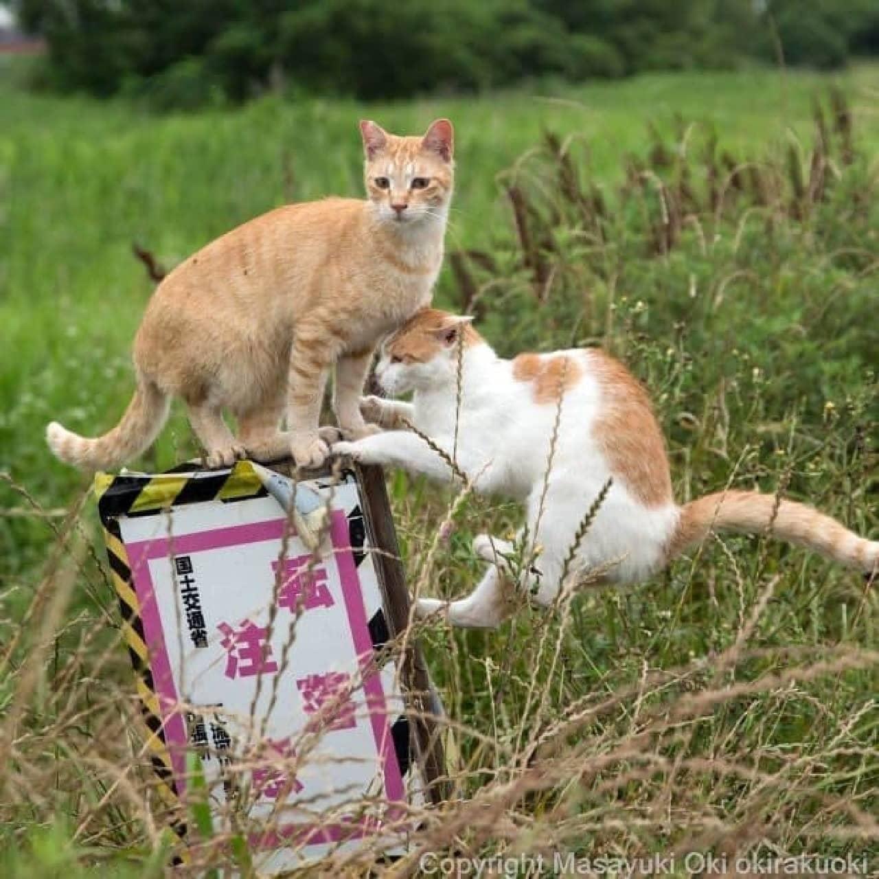 「残念すぎるネコ」って、どんなネコ?-「必死すぎるネコ」でブレイクした沖昌之さんの新作写真集発売