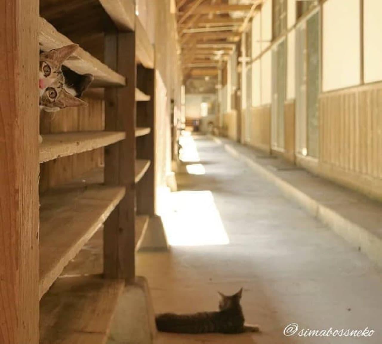 simabossnekoさんの写真展「にゃんということでしょう!」、10月3日から佐柳島で開催