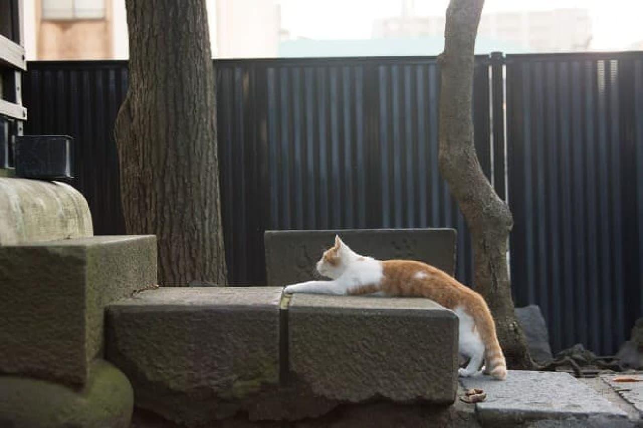 『残念すぎるネコ』発売記念、沖昌之さん写真展&サイン会