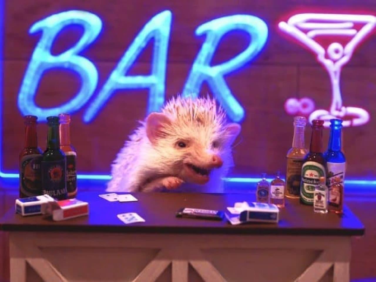 ハリネズミのいるカフェ「ちくちくCAFE」が、木金限定「ハリネズミ BAR」の営業を開始