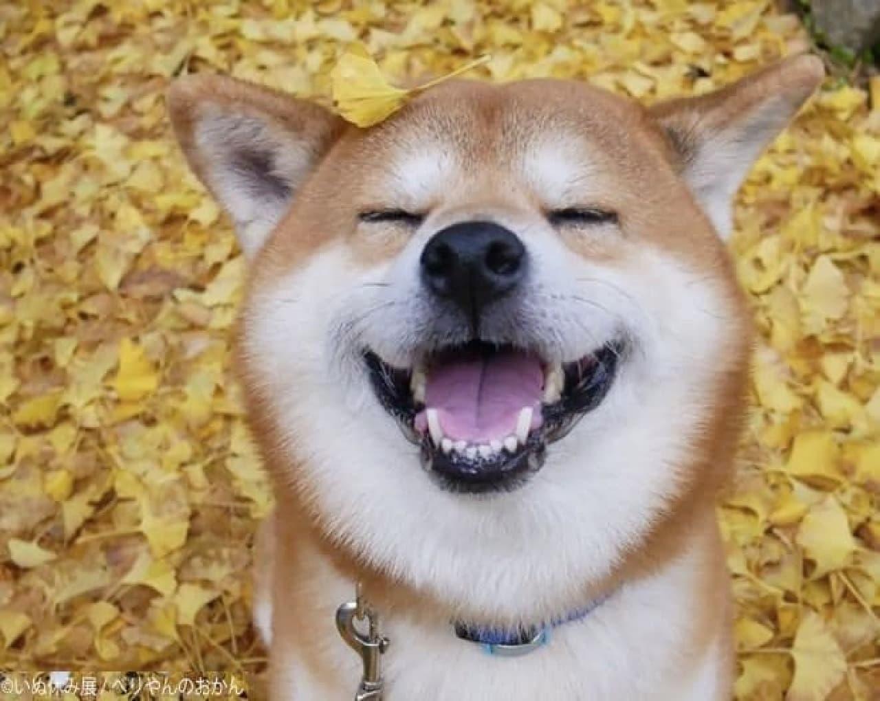 11月1日は「わんわんわん」で犬の日―、犬の合同写真&物販展「いぬ休み展」初開催