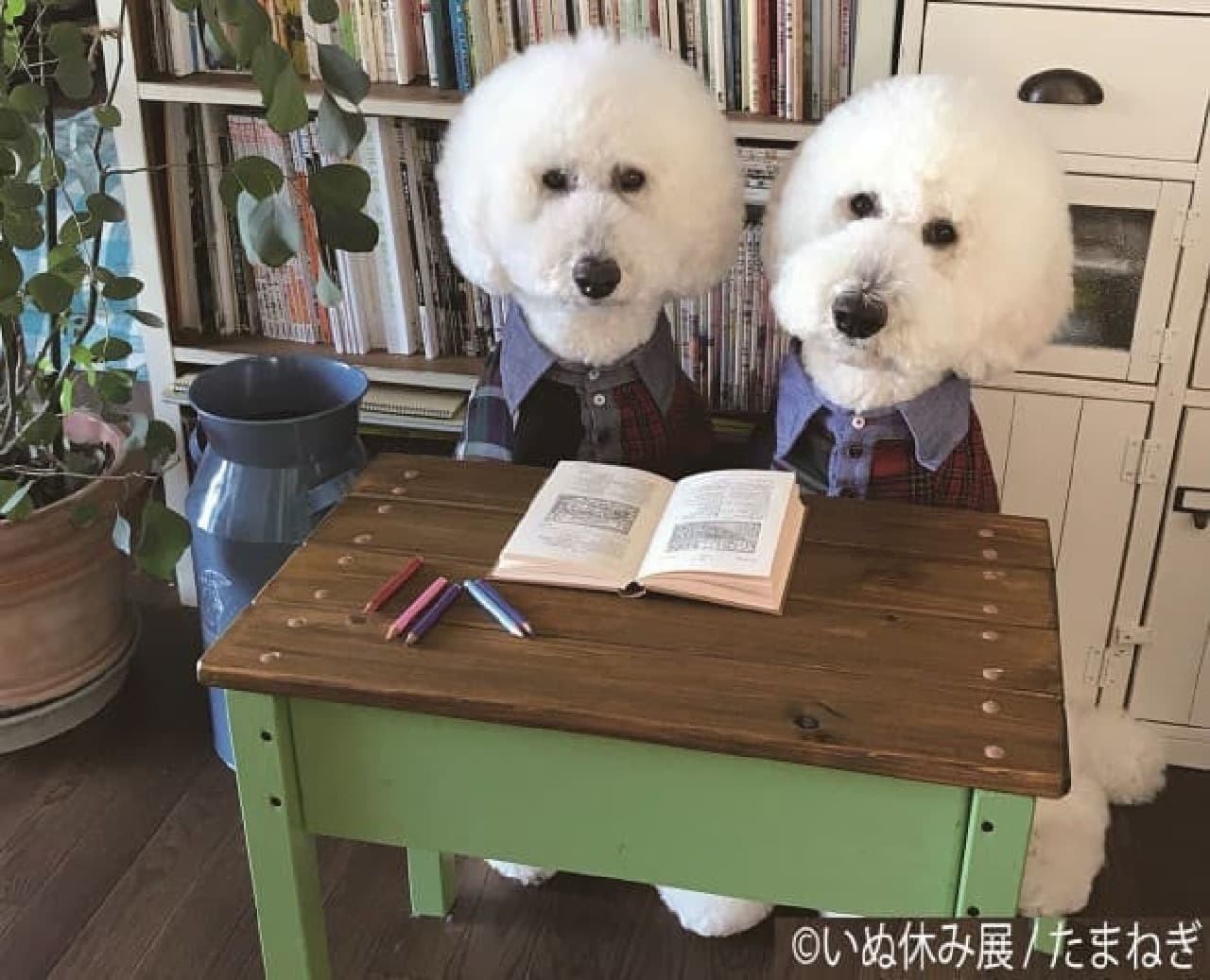 犬の合同写真&物販展「いぬ休み展」初開催