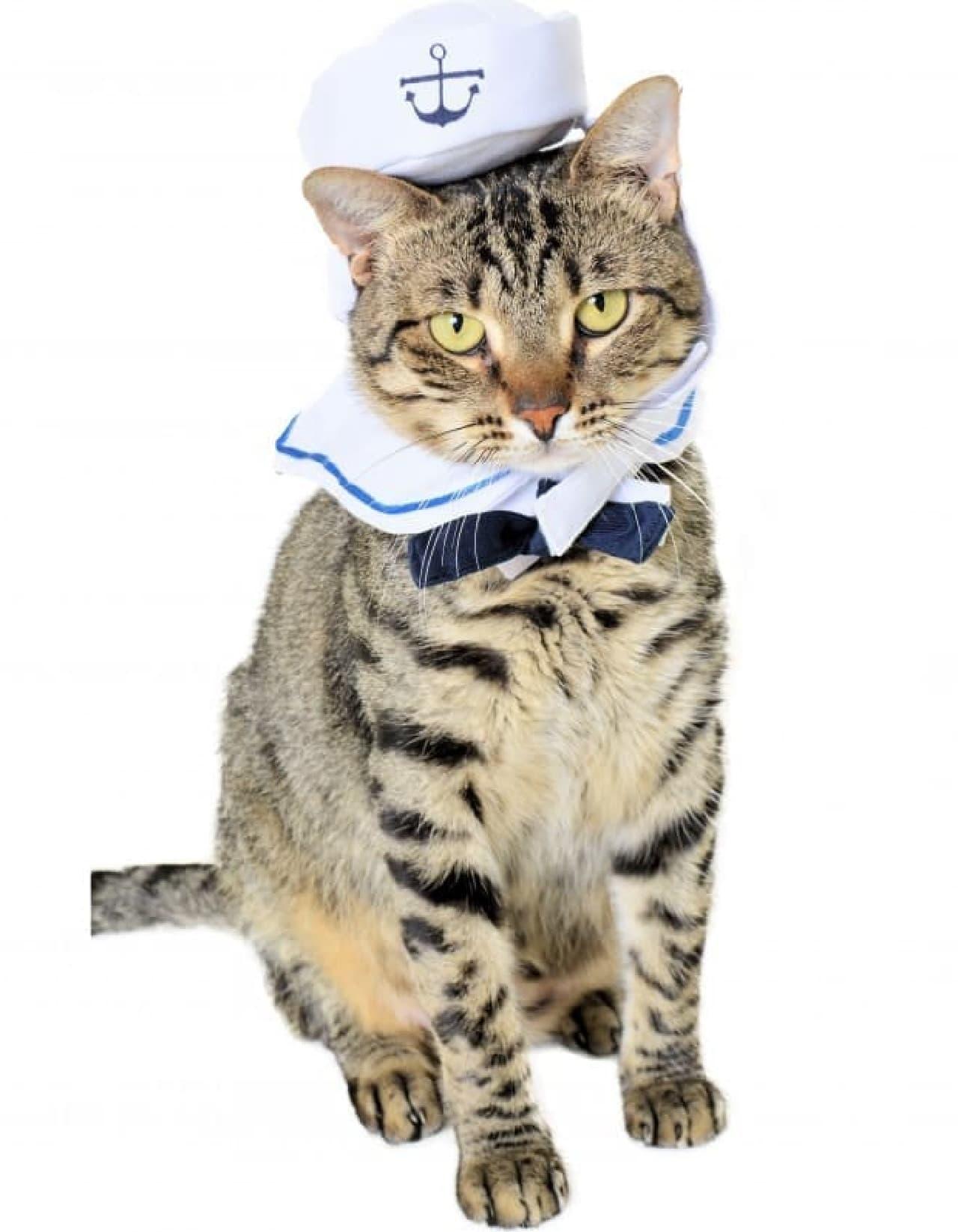 ハロウィンは、ペットと一緒に楽しみたい ― ペット用コスチューム、あれこれ