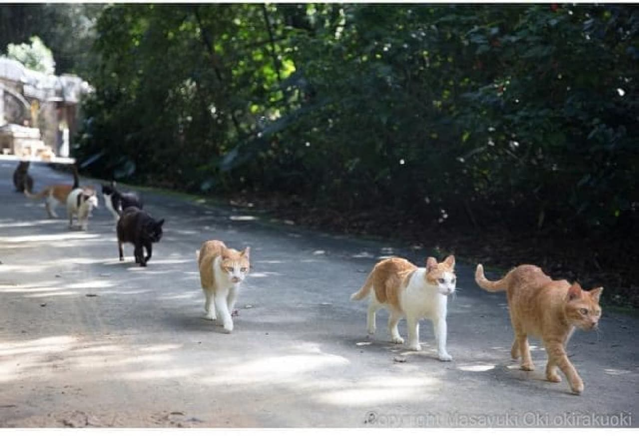 沖昌之「残念すぎるネコ」写真展、11月28日開催