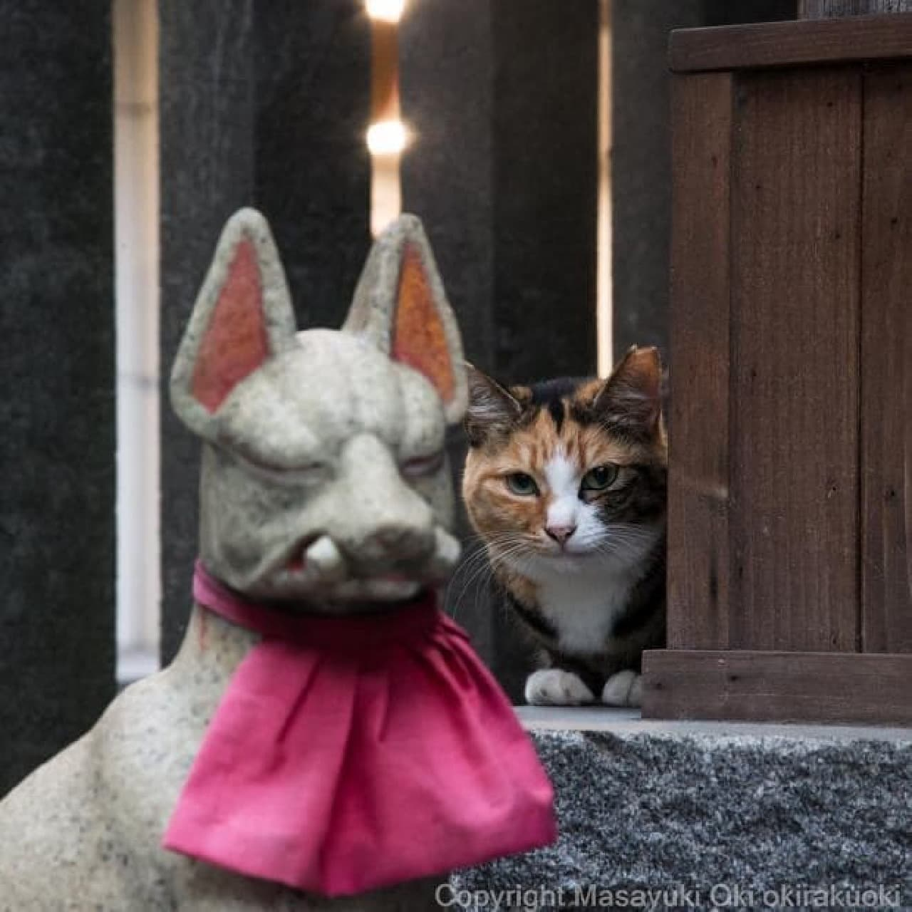 沖昌之「残念すぎるネコ」写真展