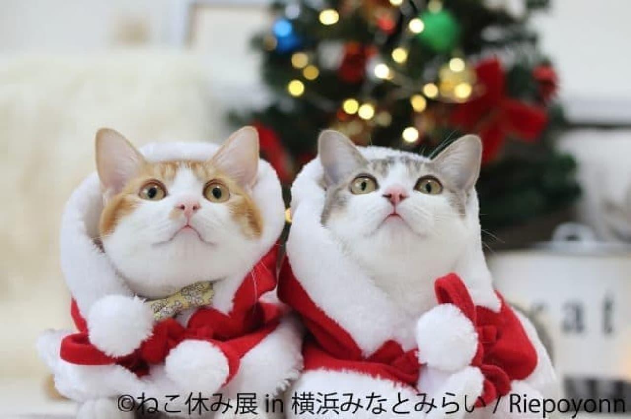 サンタネコたちが集合する「ねこ休み展 in 横浜みなとみらい」