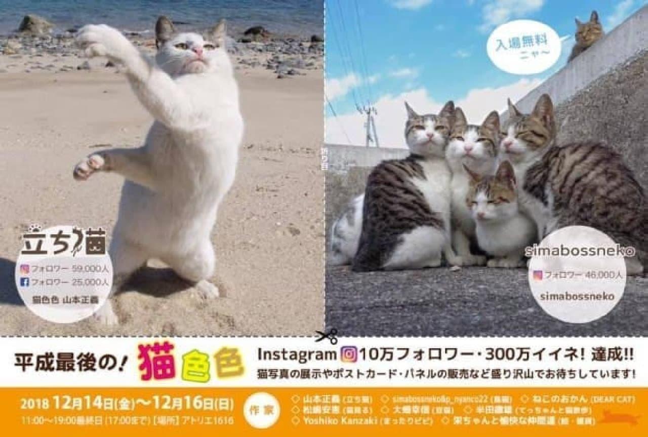 ネコ写真家山本正義さん主催の合同写真展「平成最後の!猫色々」