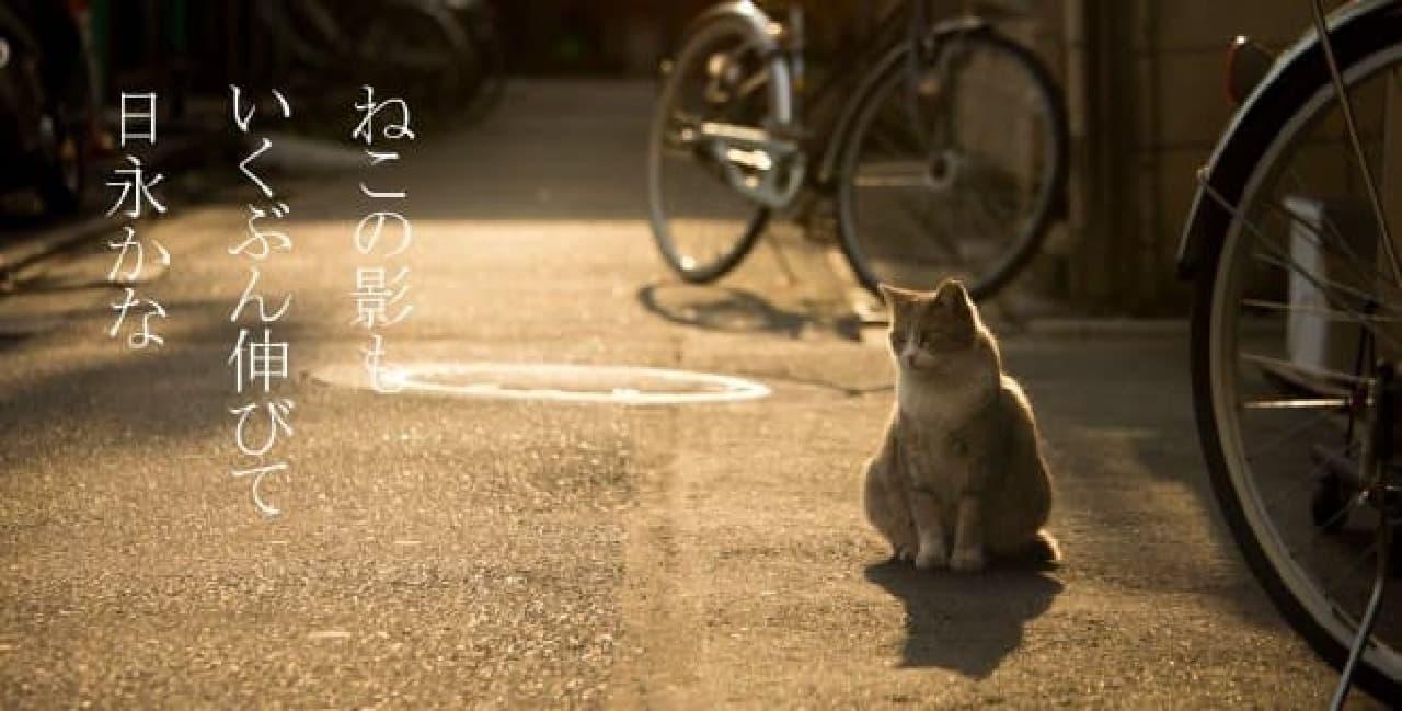 沖昌之さんと倉阪鬼一郎さんによるネコ写真集『俳句ねこ』