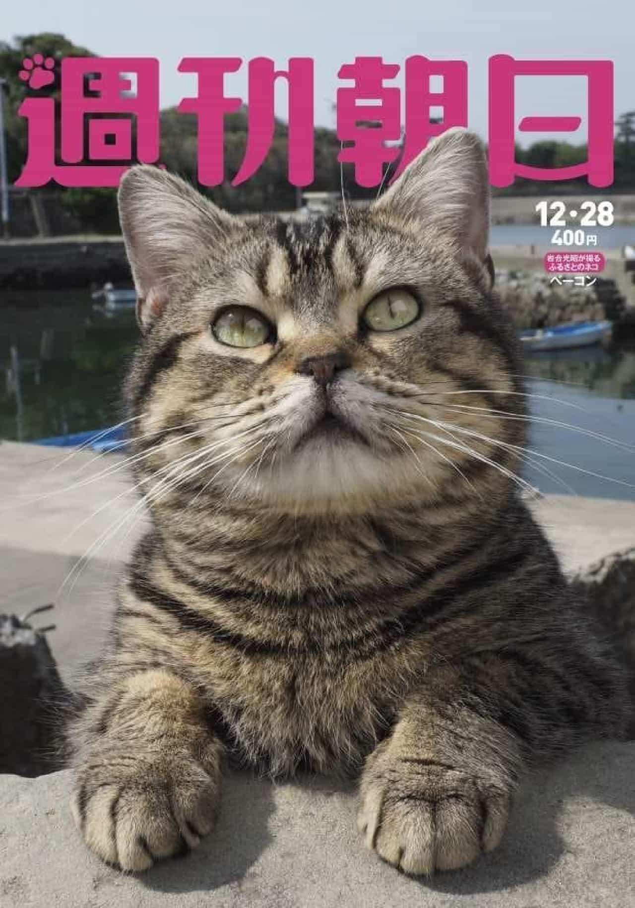 岩合光昭さん撮影のカレンダー「子ネコの冒険」付きのネコ特集号、12月18日発売