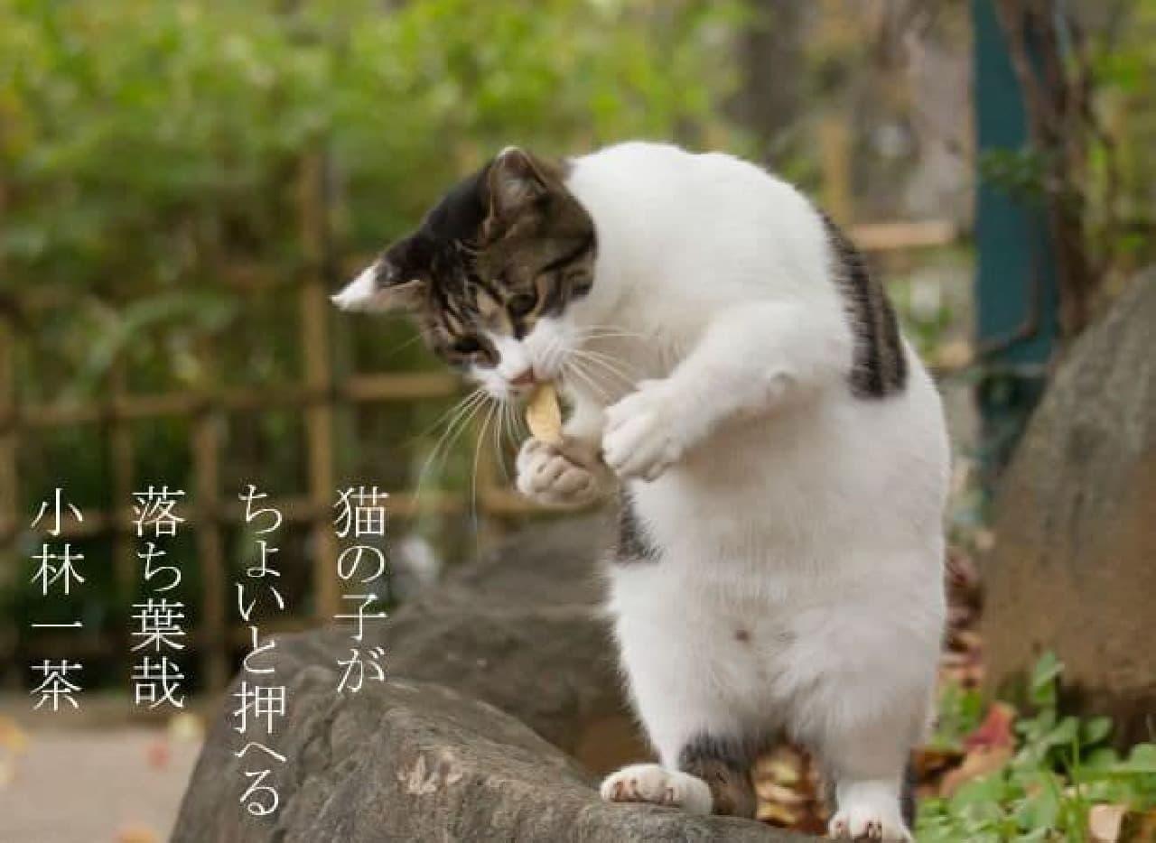 俳句でネコをシェア ― 沖昌之さんと倉阪鬼一郎さんによるネコ写真集『俳句ねこ』