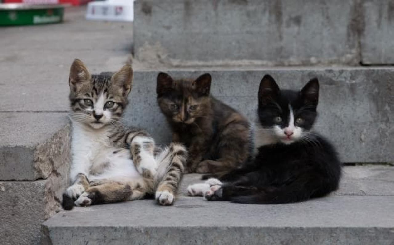 ネコの集会、見たことある??-沖昌之写真集『ヒミツのヒミツの猫集会』