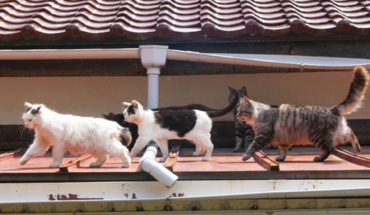 アニマルプラネット「2月は、にゃんと!猫の月」