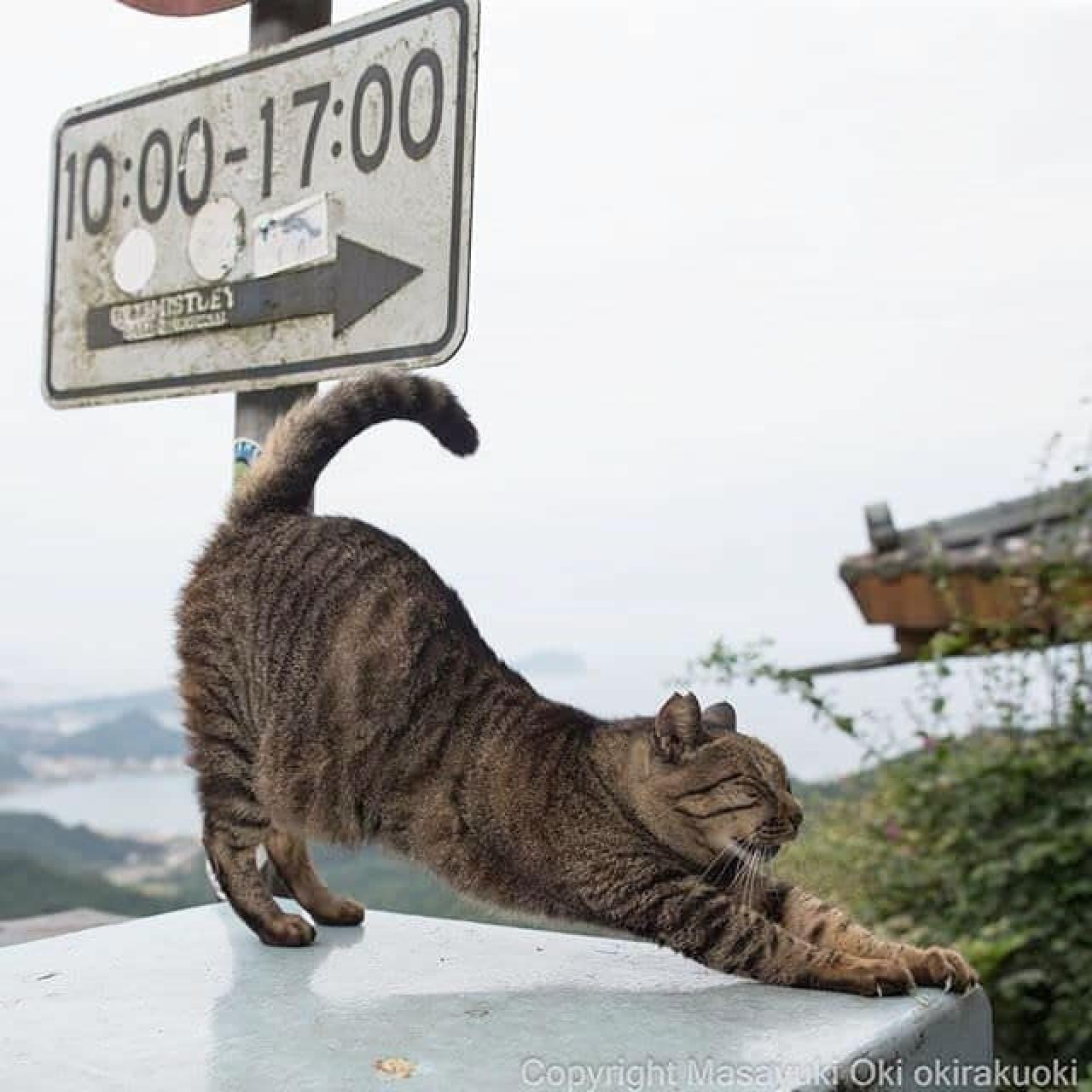 ネコ写真家沖昌之さんによる「残念すぎるネコ写真展」、2月9日スタート