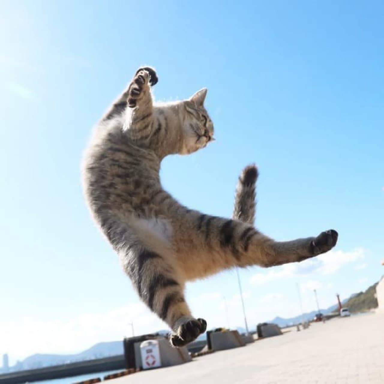 ネコ写真家山本正義さんによる写真集『立ち猫』