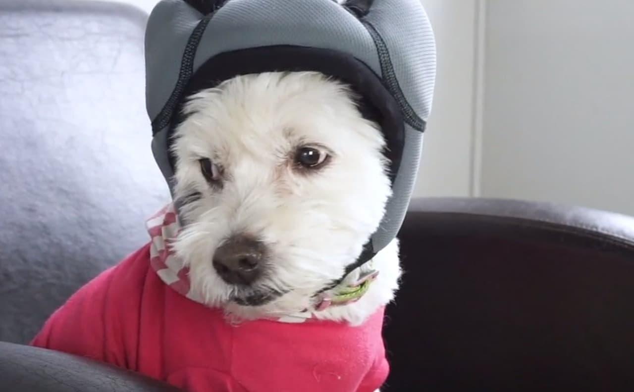 犬用のノイズキャンセリングヘッドフォン「PAWNIX」―雷や花火を怖がる犬のために
