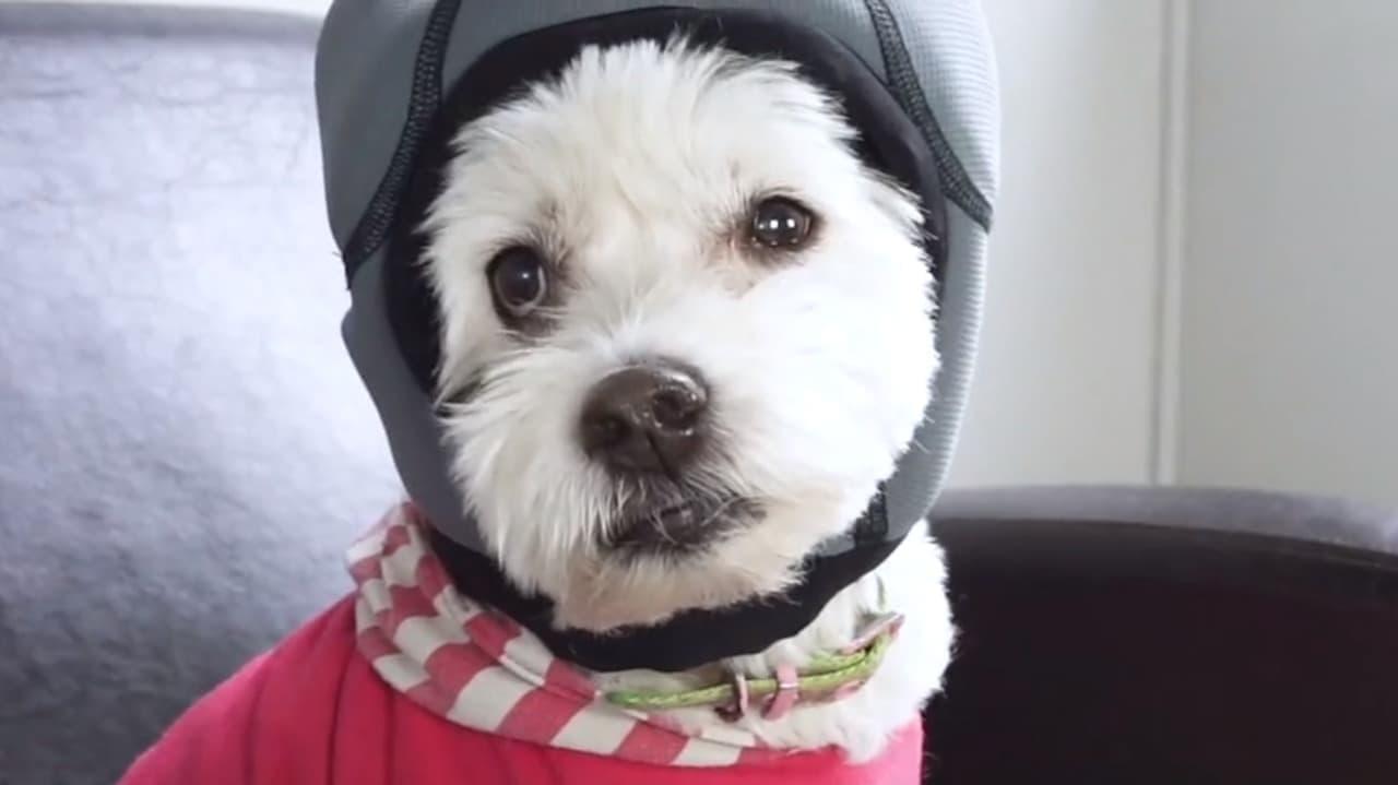 ―雷や花火を怖がる犬のために