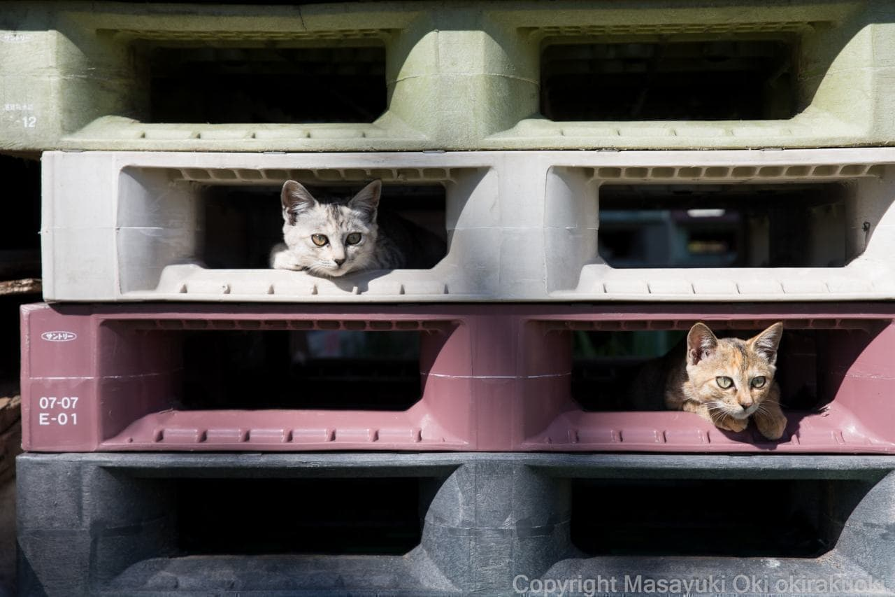 ネコによる「家政婦は見た!」 沖昌之プロデュースによるネコ写真集『かくれネコ』