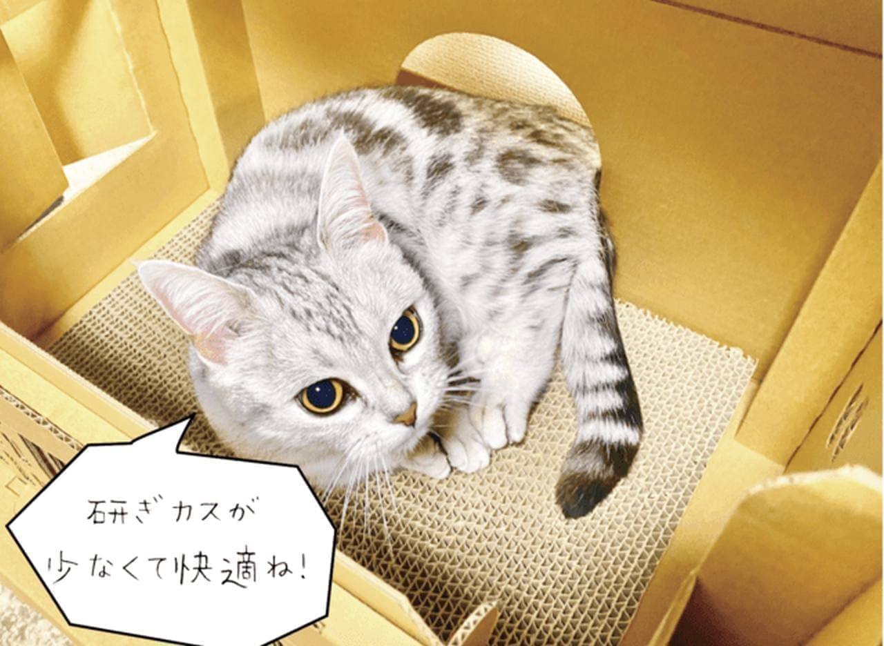 ダンボール製「もふもふ猫神社」Makuakeに登場! おやつ置きになる賽銭箱付き