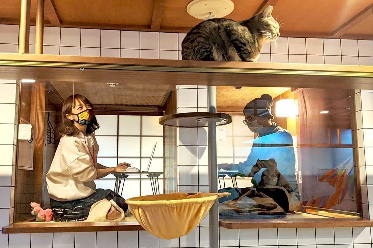 【ネコとテレワーク】ネコを眺めながらちゃぶ台で仕事ができる「猫旅籠(ねこはたご)ワーク」