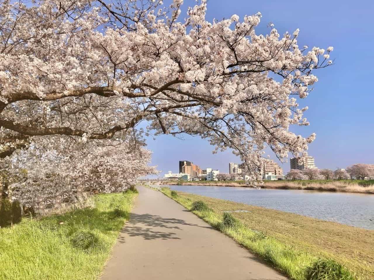 今年の花見は自転車で!「お花見カーゴバイク」が「星野リゾート BEB5土浦」に登場