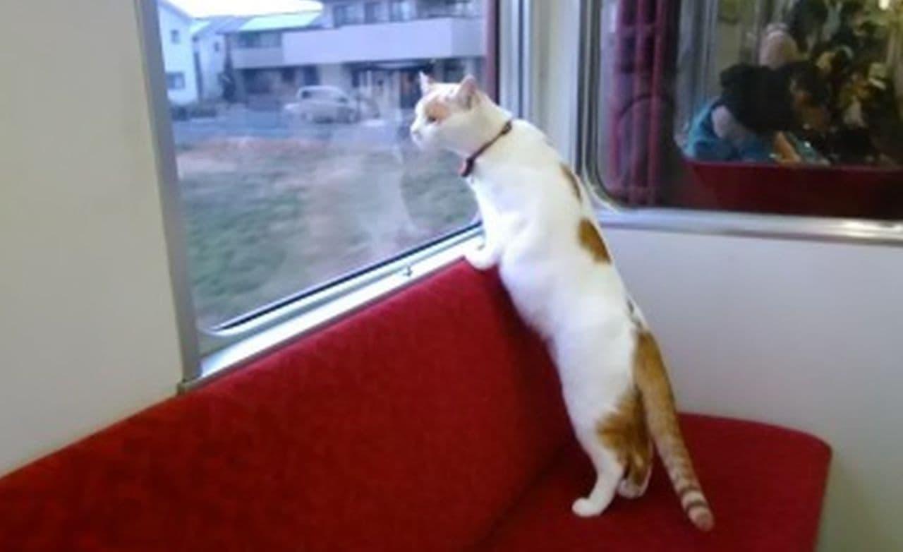 日本全国どこからでも楽しめる養老鉄道「WEBねこカフェ列車」