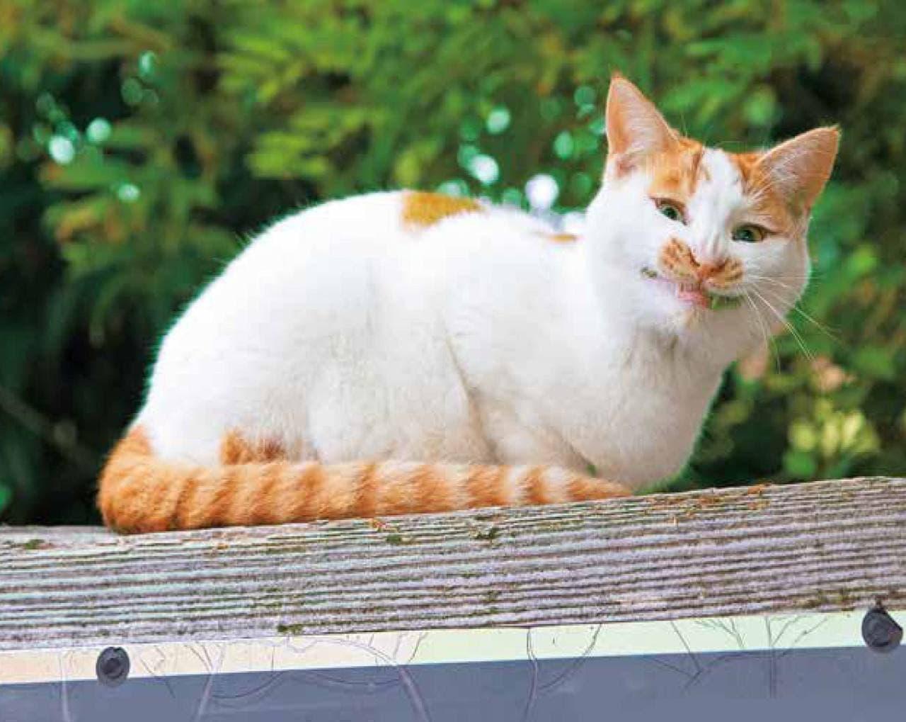 ネコ写真集『イキってるネコ』8月2日発売 沖昌之さんが撮影したちょいワルなネコたち