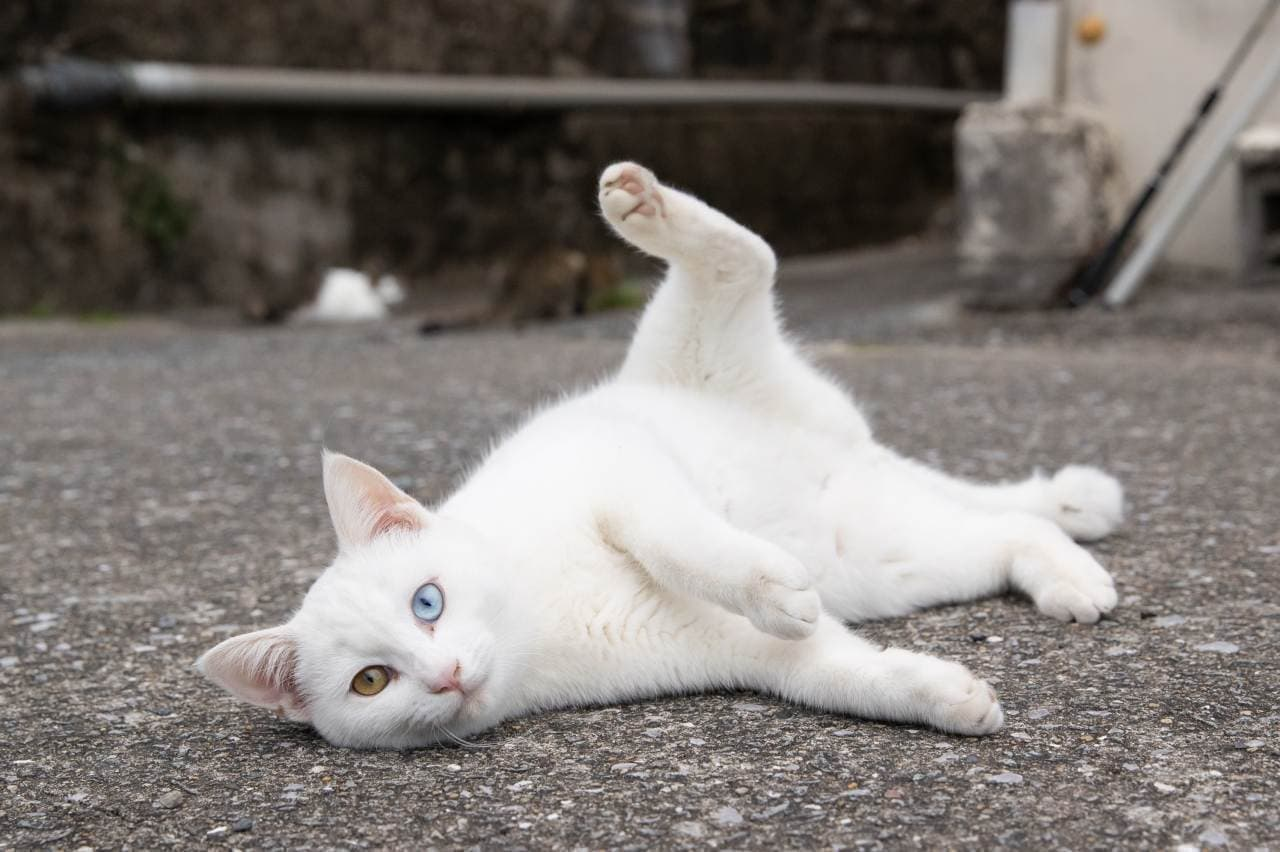 沖昌之写真展「ゆるネコ旅 ~島ネコを訪ねて~」京王百貨店で8月18日スタート