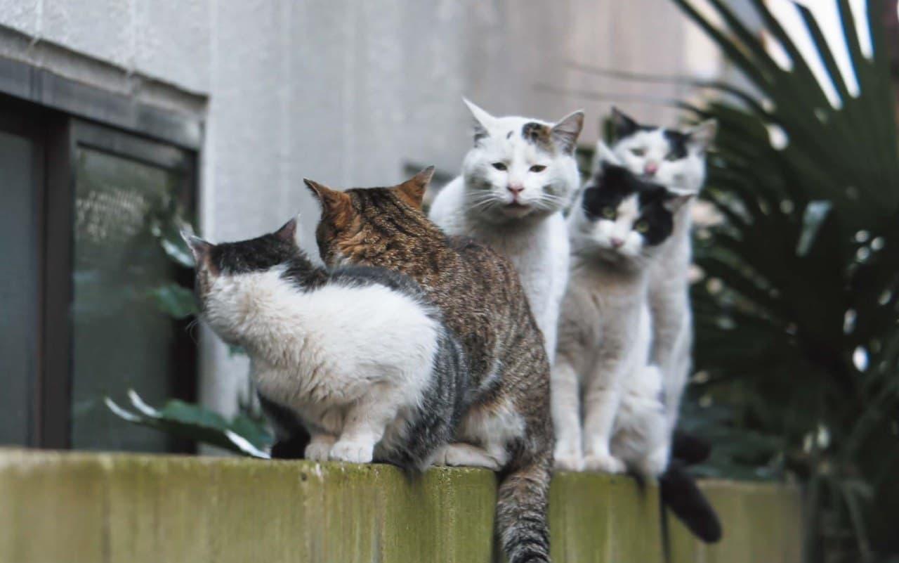 ネコ写真集『おどるネコうたうネコ』9月18日発売 沖昌之さんが撮影した想像力を刺激するネコたち